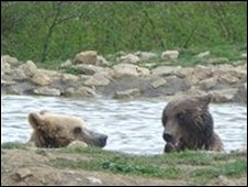 Bears in the Romanian sanctuary