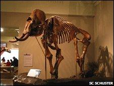 Mammoth (SC Schuster)