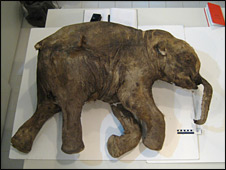 Lyuba the baby mammoth (Bernard Buigues)