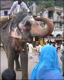 Elephant in Nasik
