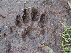 Otter paw print on Brownsman Island