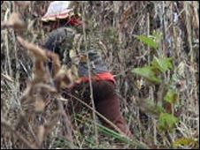 sugarcane cutter on illegal plantation