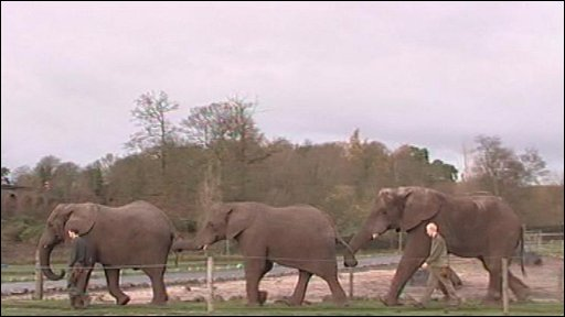 Elephants at West Midlands Safari Park have been played rock and roll music to help them relax.
