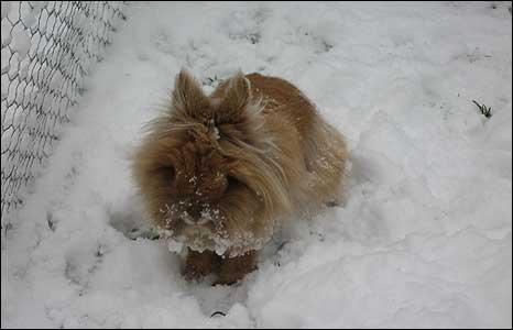 Rabbit, Attleborough, Norfolk (Photo: Steve Thompson)