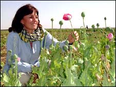 Jane Corbin in opium poppy field