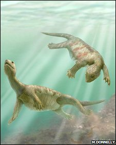 Odontochelys semitestacea was probably aquatic