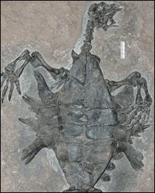 Other marine species were found with the turtle fossil