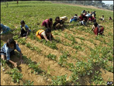 Workers in Baraikapurva village near Allahabad