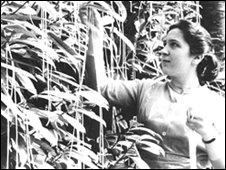 Woman harvesting spaghetti from trees