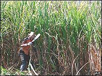 Cosecha de caña de azucar en Cuba