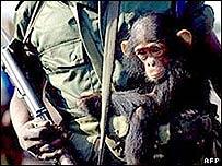 Hombre armado con cría de chimpancé