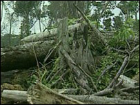 Bosque en Brasil