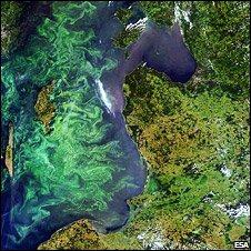 Phytoplankton bloom in the Baltic Sea (Esa)