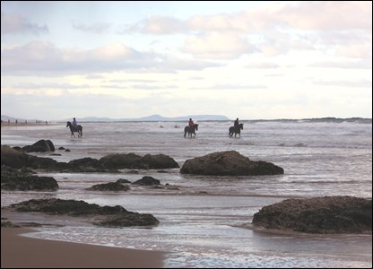 Horses at Horses on Whiterocks Beach