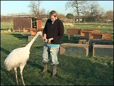 Chris Ottway with his remaining pet Rhea