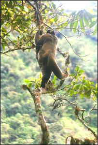Fotografía de la selva peruana tomada por Milagros Ulloa