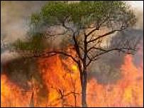 Incendios en Tierra del Fuego
