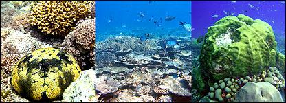 De izq. a der., arrecifes en Filipinas, Australia y el Caribe (Foto: Guillermo Jordán-Garza)