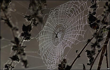 Spider's web in Bhubaneswar, India