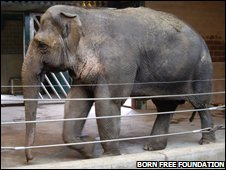 Asian elephant in a European zoo