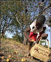 Niño recogiendo frutas