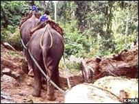 Elefantes trabajando para la industria maderera en Birmania