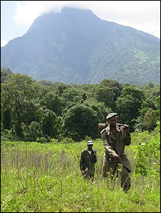 Rangers walking in the Gorilla Sector (Image: Gorilla.cd)