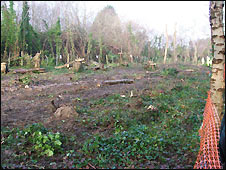 Completed felling work at Two Mile Coppice