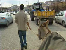 Leading the donkey through traffic