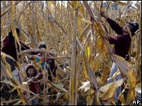 Un campesino con su familia en la cosecha.
