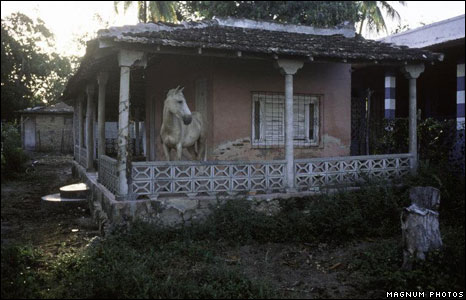 Horse on a veranda outside a house
