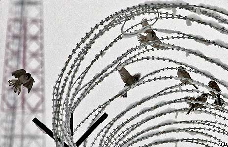 Birds on razor wire at a Combat Out Position in Afghanistan