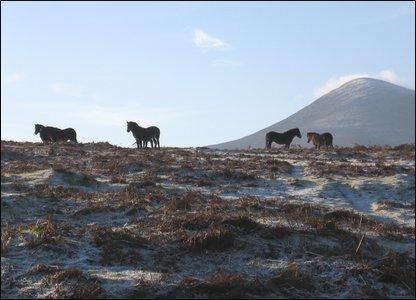 Horses at Murlough Nature Reserve