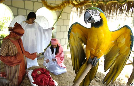 Guacamaya bird at a staging of the nativity scene at the Parque de las Leyendas zoo in Lima, Peru