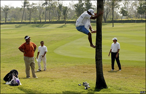 A caddie retrieves a ball from a tree for Thailand's Prom Meesawat in Bangkok