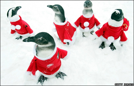 Penguins dressed in Santa Claus costumes at a park in South Korea
