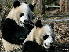 Tuan Tuan and Yuan Yuan were offered to Taiwan three years ago
