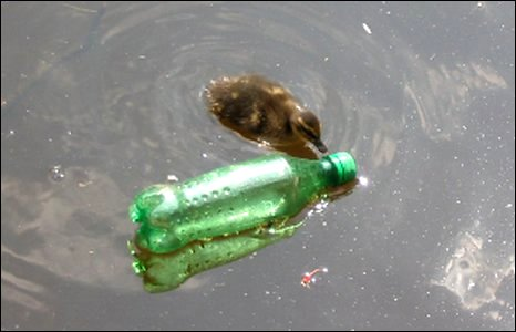 Duckling and floating bottle