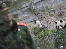 Chinese soldier watches over two pandas due to be relocated to Taiwan on Tuesday in a gesture of warming ties