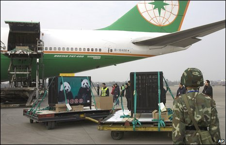 Pandas loaded onto a plane in Sichuan province, China (23/12/2008)