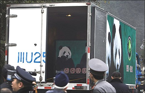 Police watch pandas arrive at the airport in Ya'an, Sichuan province (23/12/2008)