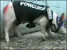 Pig dressed as prosecutor (pic: PRO-TV Chisinau)