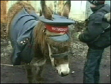 Donkey dressed as policeman (pic: PRO-TV Chisinau)