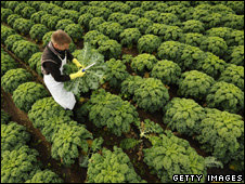 Farm working cutting kale (Getty Images)