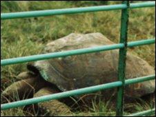 'Jonathan' the tortoise