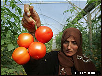 Mujer en Gaza muestra tomates