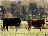 Vacas en Irlanda