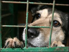 Generic dog in cage