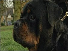 Beamish the Rottweiler