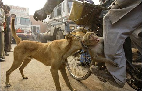 Stray dog and pet monkey in Gurgaon, India.